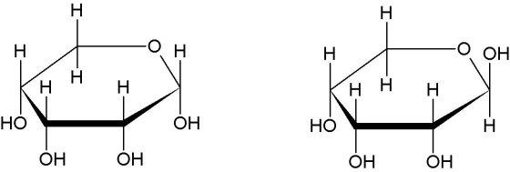 Ribopyranose