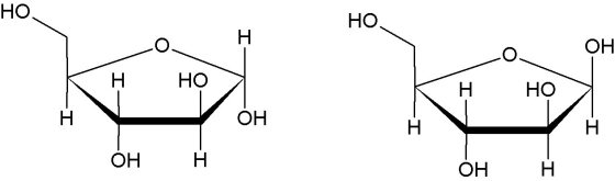 Alpha-Ribofuranose Beta-Ribofuranose